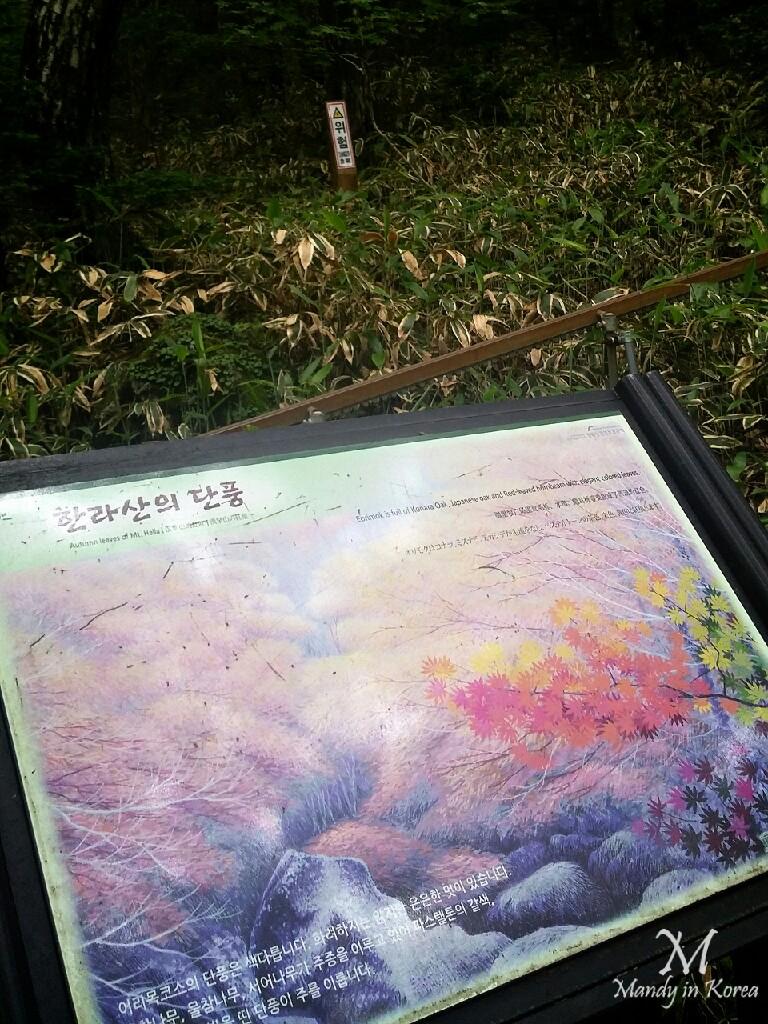 濟州漢拏山