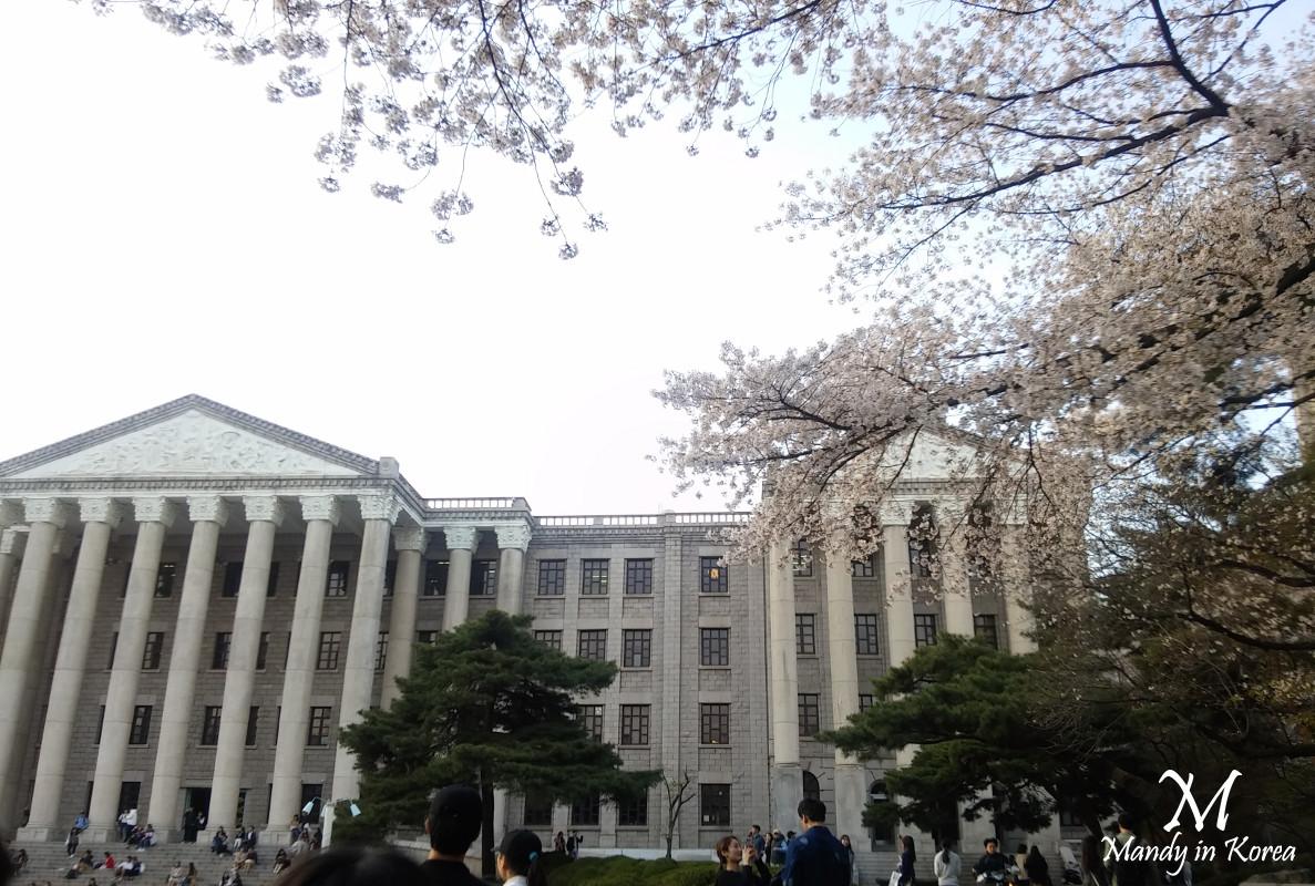 首爾春天❀慶熙大學快閃賞櫻